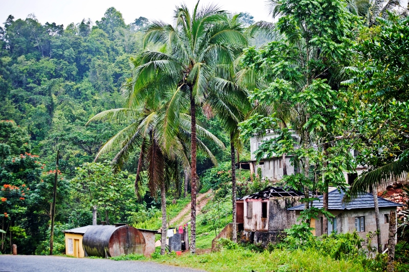 village in the jungle