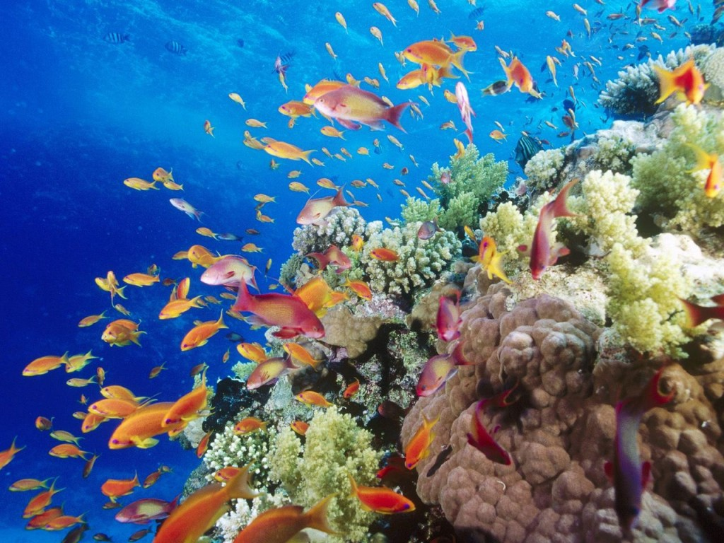 coral-reef--southern-red-sea--near-safaga--egypt